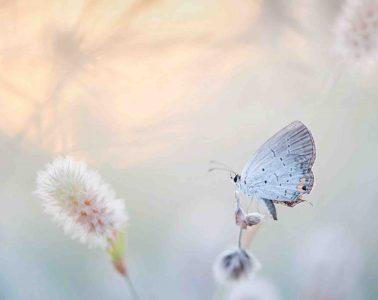 Hoe vlinder aan haar lange tong komt
