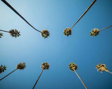 Palmbomen - bij verhaal van Kaj van der Plas